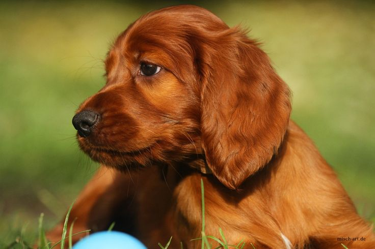 5 Interesting Puppy Facts. - Random Facts