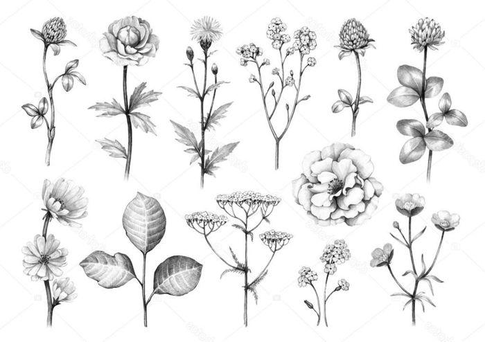 1001 Ideas De Dibujos De Flores Faciles Y Bonitos Flores Para Dibujar Flores Dibujadas A Lapiz Dibujos De Flores