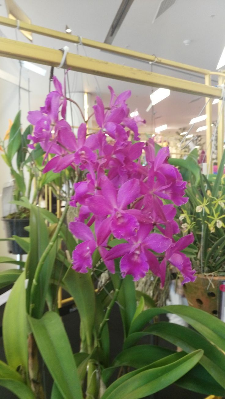 Orchidaceae is a diverse and widespread family of flowering plants, with blooms that are often colourful and often fragrant, commonly known as the orchid family.  @RoyalParagon, Bangkok