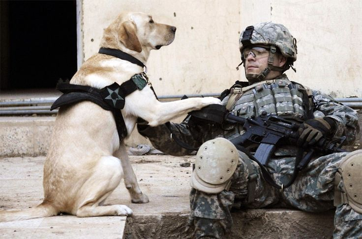 Heroes. Man & man's best friend! I love that our soldiers have