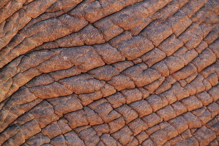#africa #african bush elephant #animal #animals #background #brown #close #elephant #elephant skin #fold #free photo #macro #pattern #skin #skin structure #south africa #structure #texture #textures #wrinkled