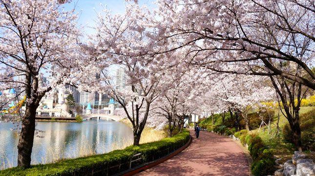 Selain Terkenal Dengan Boyband Dan Girlbandnya Korea Selatan Juga Menyimpan Segudang Keindahan Alam Dan Mempunyai Be Bunga Sakura Pemandangan Fotografi Pantai