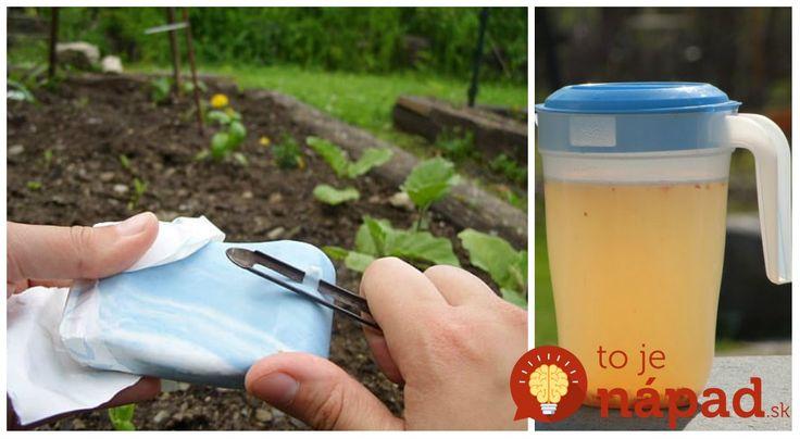 Toto je môj tip, ako ochrániť plodiny pred inváziou chlpatých hladošov tak, aby ste im neublížili. Teraz sa jednoducho držia od mojej úrody a kvetov ďalej.
