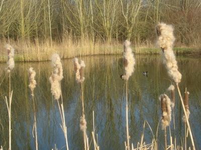 Photos at the Lakes