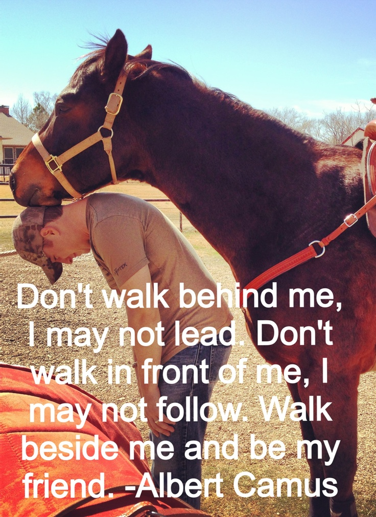 Horse quotes.... www.facebook.com/horselovelife