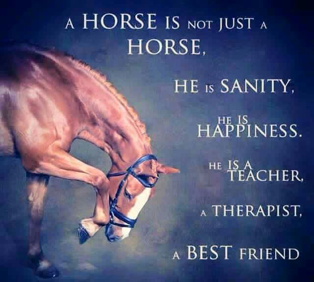 """.Horse quote. """"A horse is not just a horse. He is sanity, he is happiness. He is a teacher, a therapist, a best friend."""""""