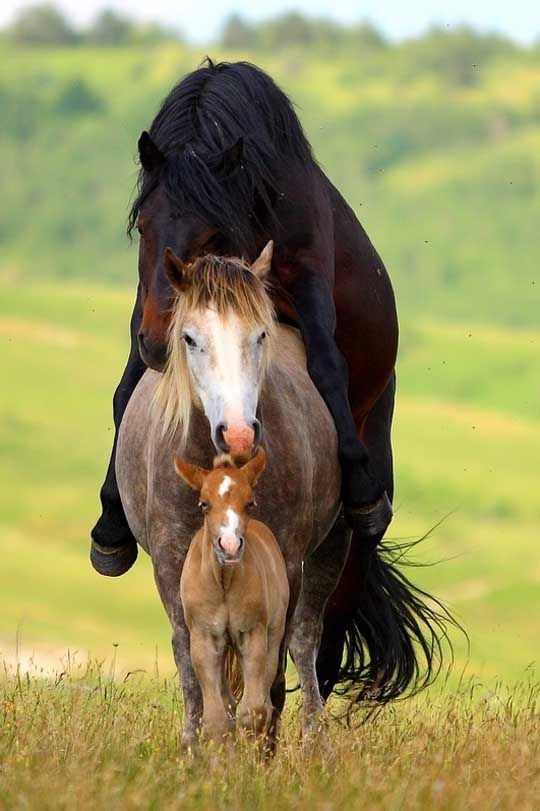578 Best Images About A Foal S Love On Pinterest
