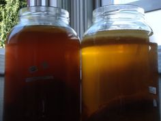 What's the difference between using Green Tea vs Black Tea for Kombucha? Find out what each tea brings to you Kombucha and which is the best tea type!