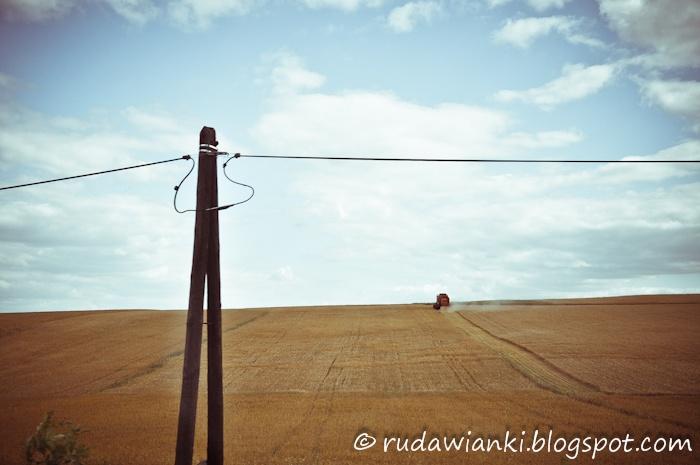 Harvest. Poland.  rudawianki.blogspot.com