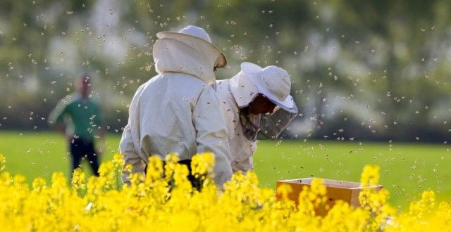 apicultori rapita