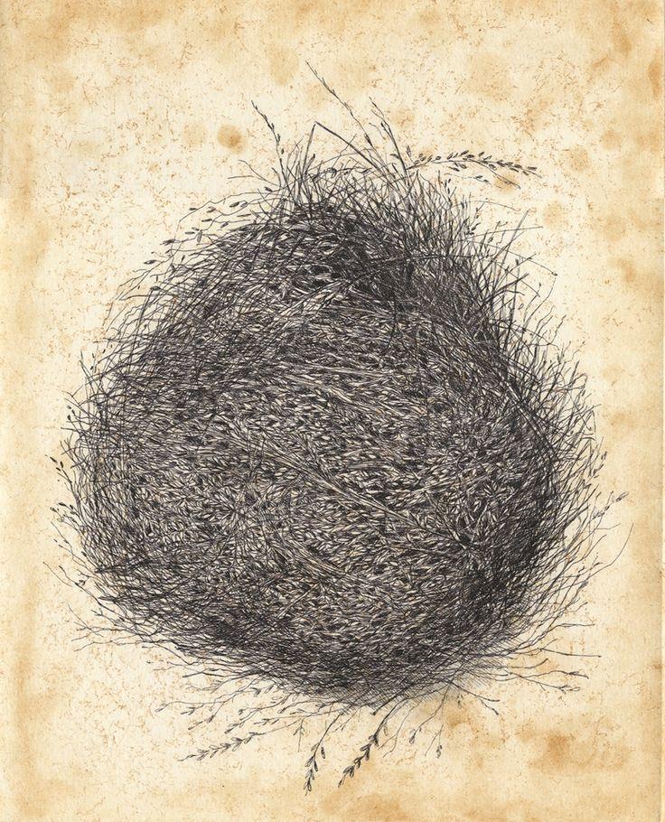 Red Browed Finch nest etching Artist Sandi Rigby