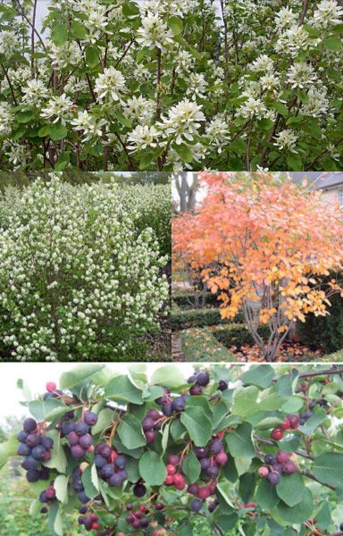17 best native plants pennsylvania images on pinterest