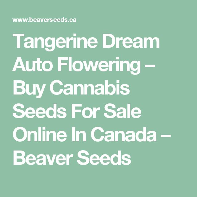 Tangerine Dream Auto Flowering – Buy Cannabis Seeds For Sale Online In Canada – Beaver Seeds