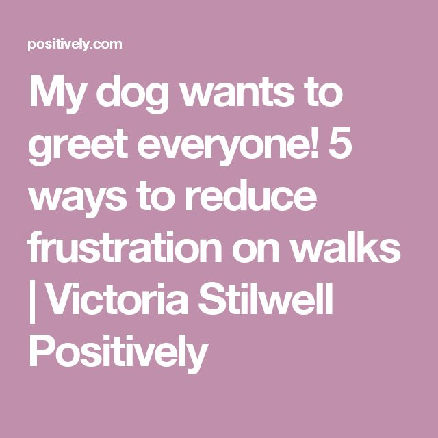 My dog wants to greet everyone! 5 ways to reduce frustration on walks | Victoria Stilwell Positively