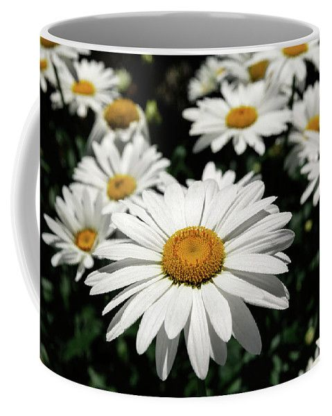 Coffee Mug featuring the photograph White Daisies by Evgeniya Lystsova. Landscape of white daisy flowers outdoor in summer time in San Diego, California. Make your coffee time special with White Daises on your Mug. Perfect Art product for your Kitchen or Office. More styles you can find in my gallery. Each mug is dishwasher and microwave safe. SHIPS WITHIN 2 -3 business days. #Daises #Flower #ArtForHome #Mugs