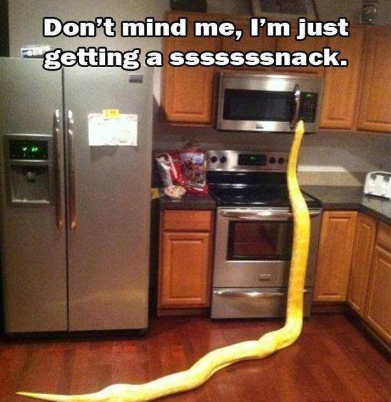 Kitchen Disaster: Kitchen Disaster
