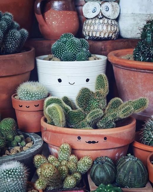 35+ Smart Ways to Decorate Your Home with Cactus | Garden
