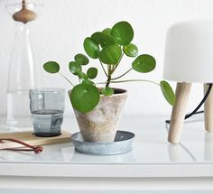 Via My Unfinished Home | Milk Lamp | Nordic | Pilea Peperomioides