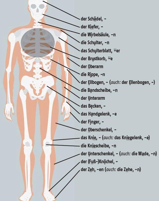 62 best German Medical Terms images on Pinterest | Learn german ...