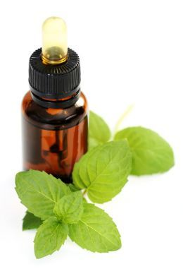 How to Make Peppermint Oil.   A good peppermint patch project - cooling peppermint foot lotion.