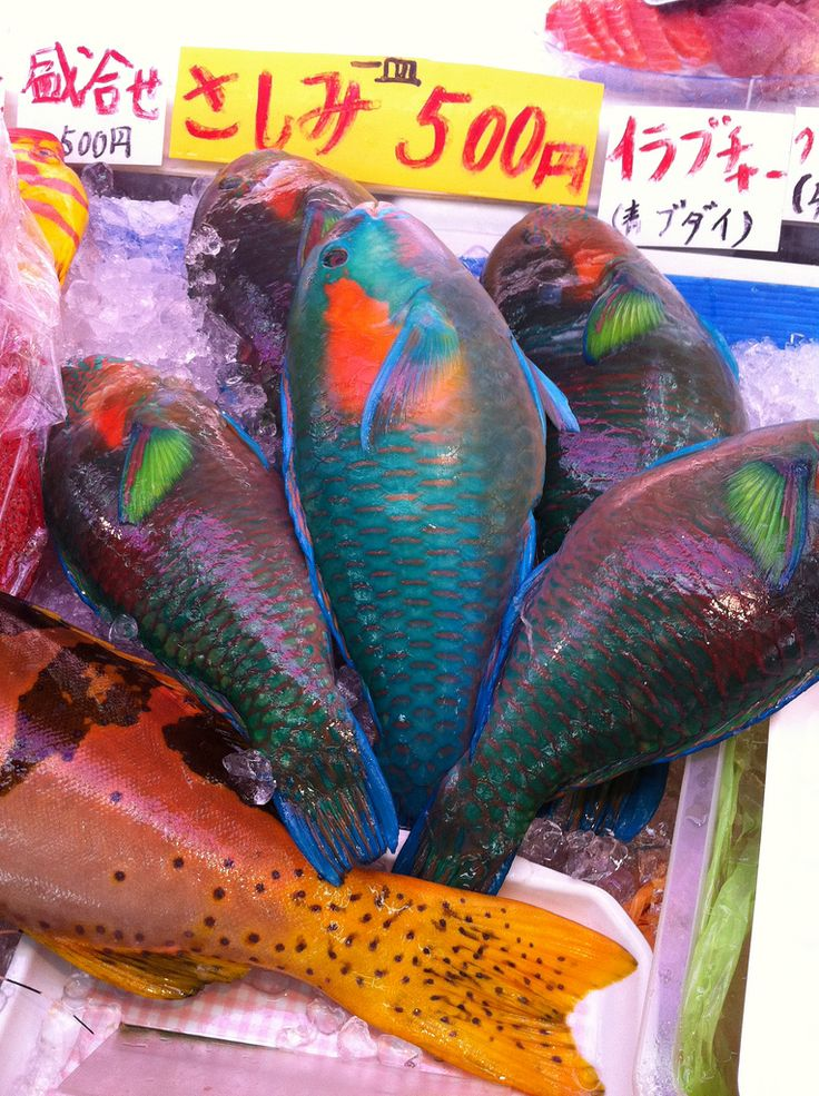 113 best okinawa food images on pinterest for Walking fish for sale