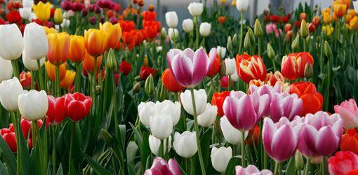 Bloemen, bollen, bomen en stekjes.. Dat is nu nog niet aan de orde van de dag. Deze wens bewaar ik voor volgend jaar...