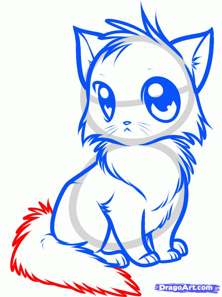 How To Draw A Cute Anime Cat Step By Step Cat Drawing