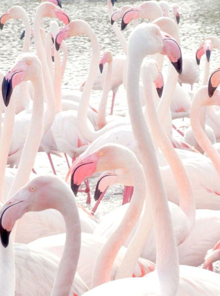 mrwonderful_paleta_colores_rosa_pale_pink_026