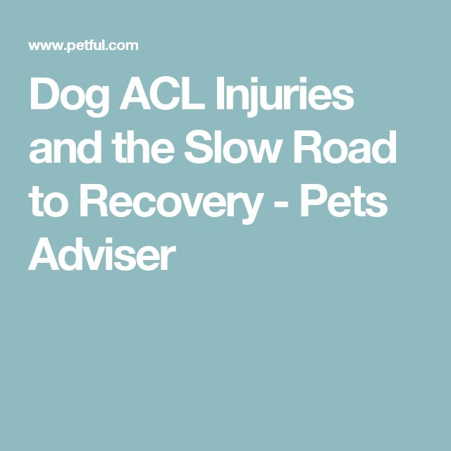Dog ACL Injuries and the Slow Road to Recovery - Pets Adviser