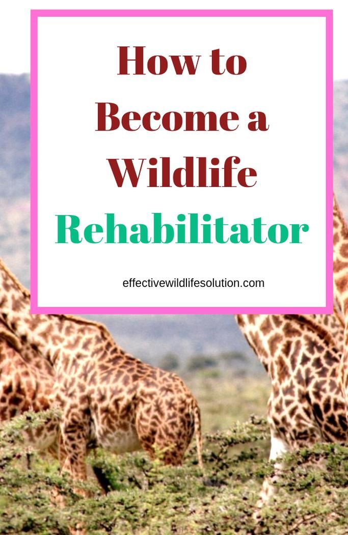 Are You Interested In Bing A Wildlife Rehabilitator Well You Havee To The Right Place Here You Will Find Everyt Wildlife Rehabilitation Wildlife Save Wildlife