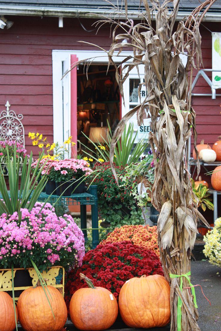 Charlottesville, VA Store fronts, Pumpkin, Plants
