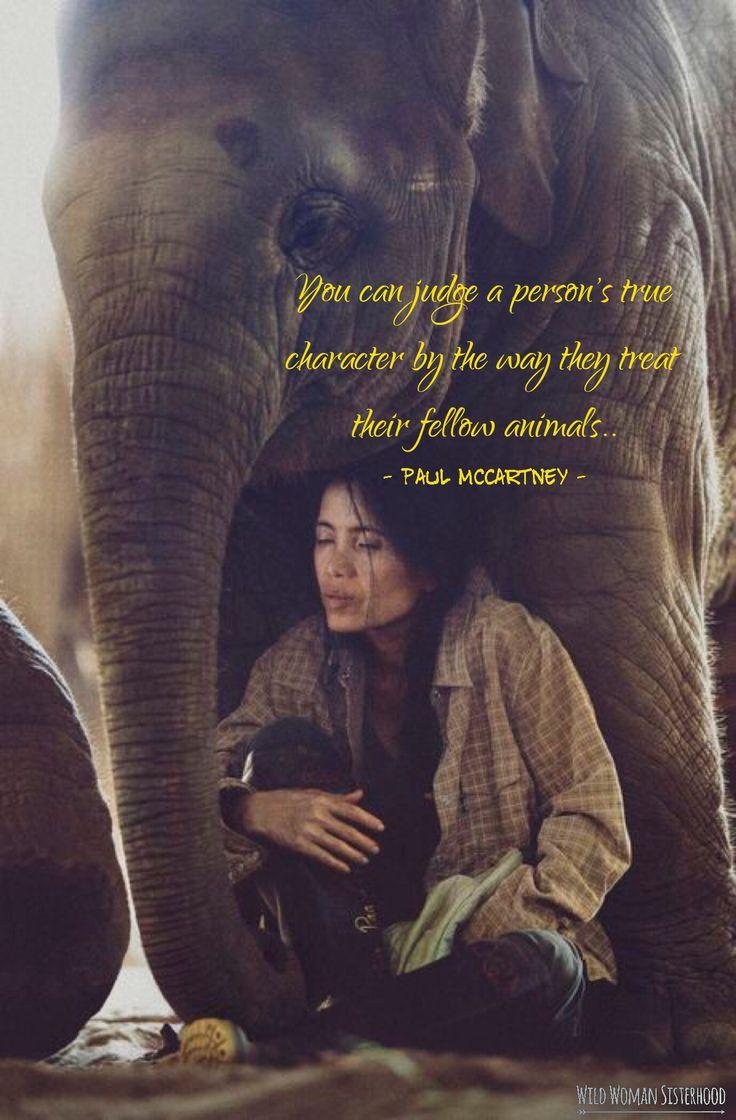 You can judge a person's true character by the way they treat their fellow animals ~ Paul McCartney WILD WOMAN SISTERHOOD™ #WildWomanSisterhood #wildwomanmedicine #womenoftheearth #nature #consciouscommunity