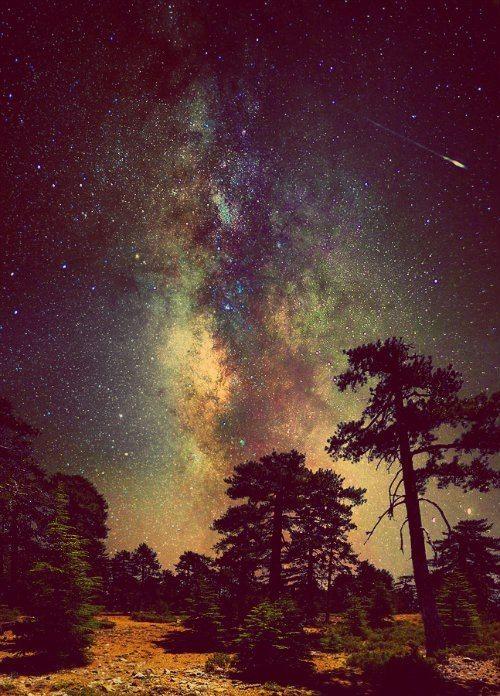 Noite encantada