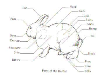 anatomy of a rabbit coloring pictures | Learning about each part of a Rabbit's Anatomy