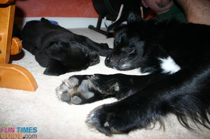 Should You Trim Your Dog S Hairy Toes And Paws Dog Paw Pads Dog Pads Your Dog