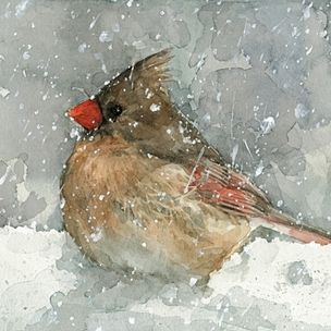 Cardinal In Snow - Bird Watercolor Painting by