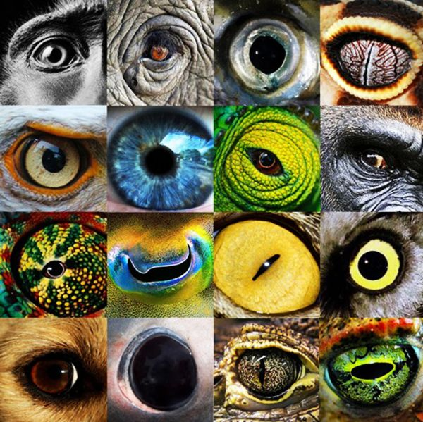 Best Eye Pictures Images On Pinterest Goats A Giraffe And Bb - 24 detailed close ups of animal eyes