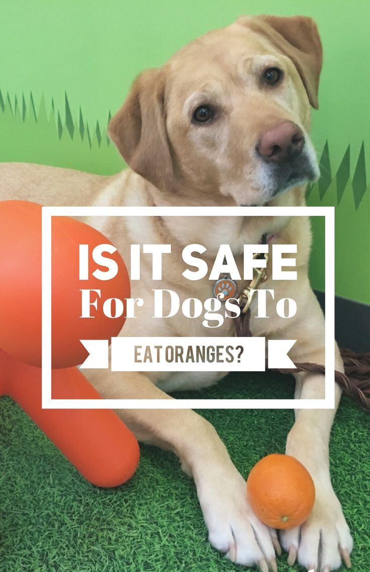 Is it safe for dogs to eat oranges? The answer may