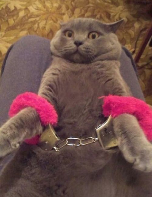 Fifty Shades of Grey Cat: Somebody Put Me In Furry Pink Cat Cuffs
