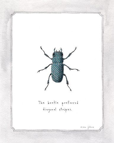the beetle preferred diagonal stripes - signed print  John