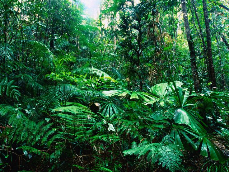 Tropical Rainforest, Lacey Creek, Queensland, Australia