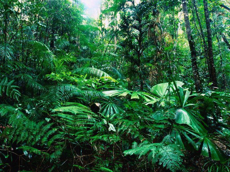 Tropical Rainforest, Lacey Creek, Queensland, Australia
