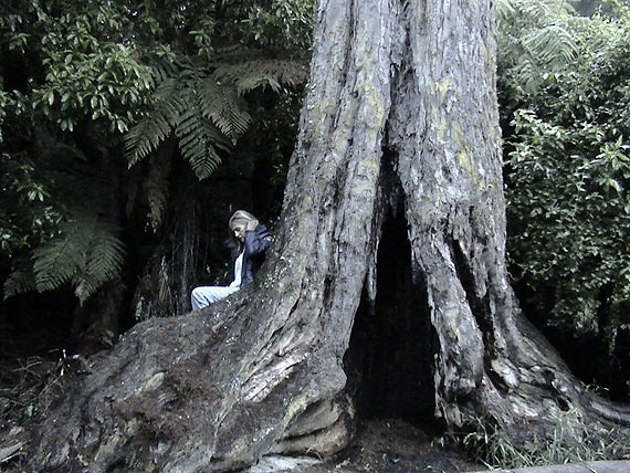 This is me at a little known bush reserve just off The Forgotten World Highway between Taumarunui and New Plymouth, New Zealand. Tranquillity that brings forth emotions you didn't know you had.
