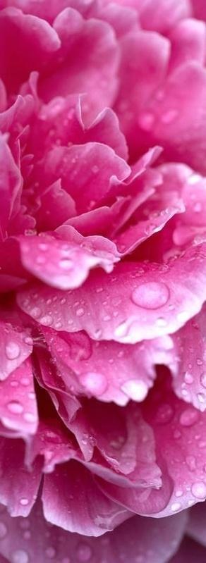 Hot pink ✿⊱╮ by VoyageVisuel