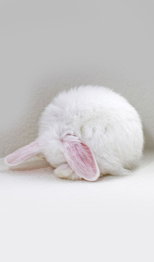 Dying of cute - bunny shyness