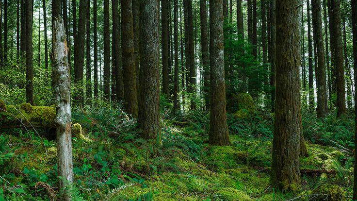 Pagar a dueños de bosques ayuda a parar el cambio climático