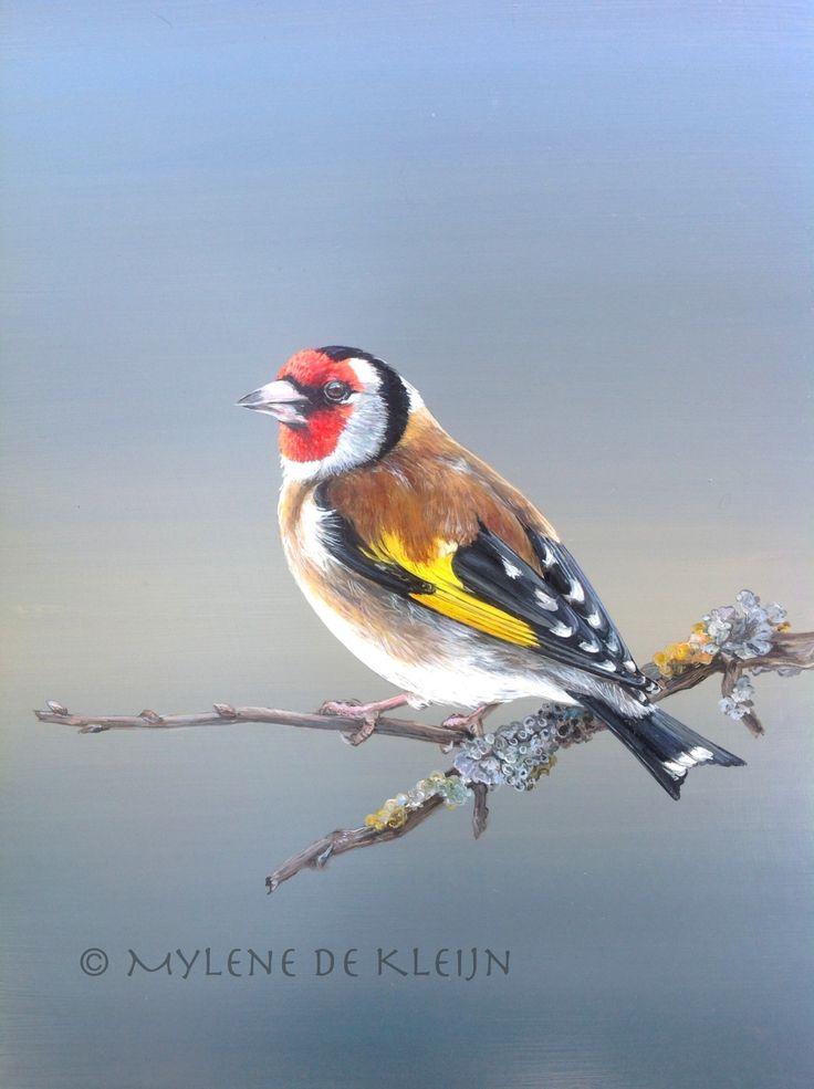Het puttertje, olie verf 18 cm bij 24 cm. Goldfinch, oilpainting 18 cm by 24 cm.