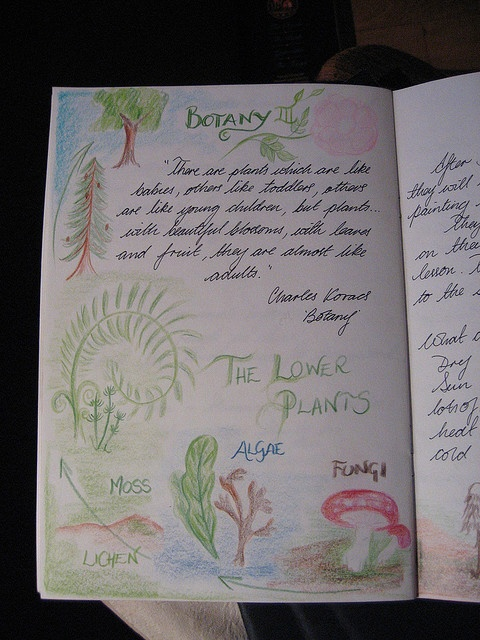 Botany Main Lesson