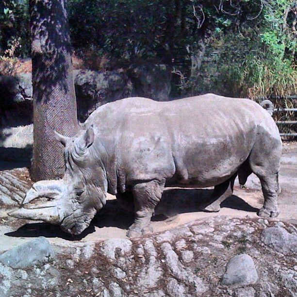 Zoológico de Chapultepec  Miguel Hidalgo, Federal District $12 9-4:30