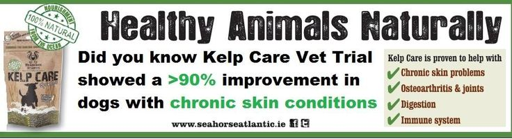 itchy dog with skin problems? Kelp Care has the answer. #dog #canine